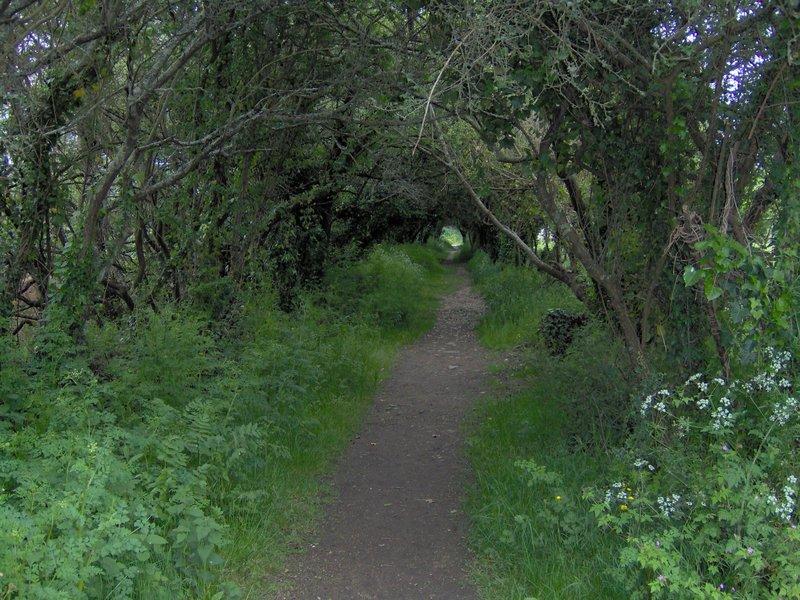 Chemin arboré étang de Kermélo