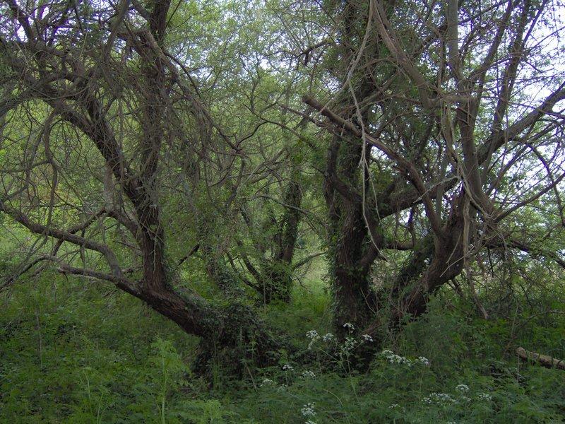arbres étangs du Ter