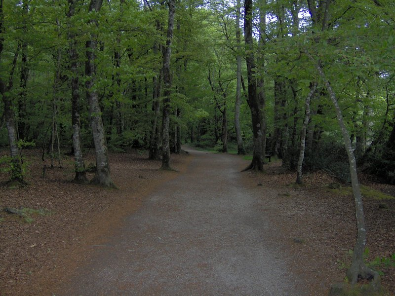 chemin étangs du Ter