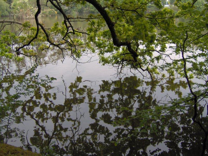 reflet branches dans l'eau étangs du Ter