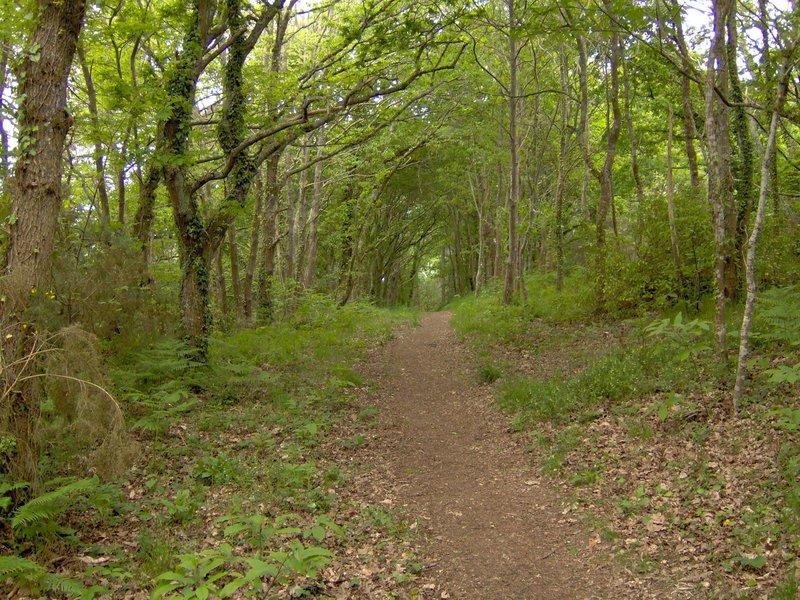 chemin dans les bois étang de Kermélo