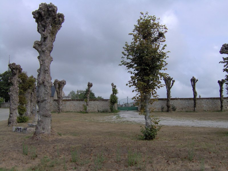 Arbres entrée cimetière chapelle Lesbin