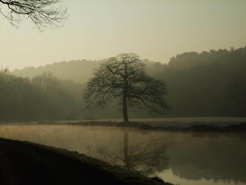 Canal de Nantes à Brest : photo d'un arbre en contre-jour