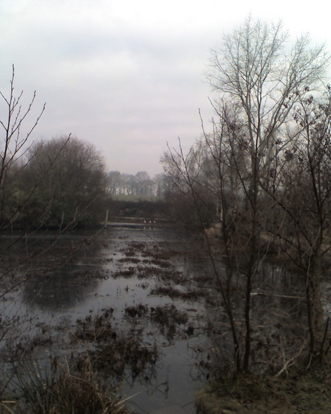 Oies plan d'eau en partie gelé Pont-Scorff hiver 2009
