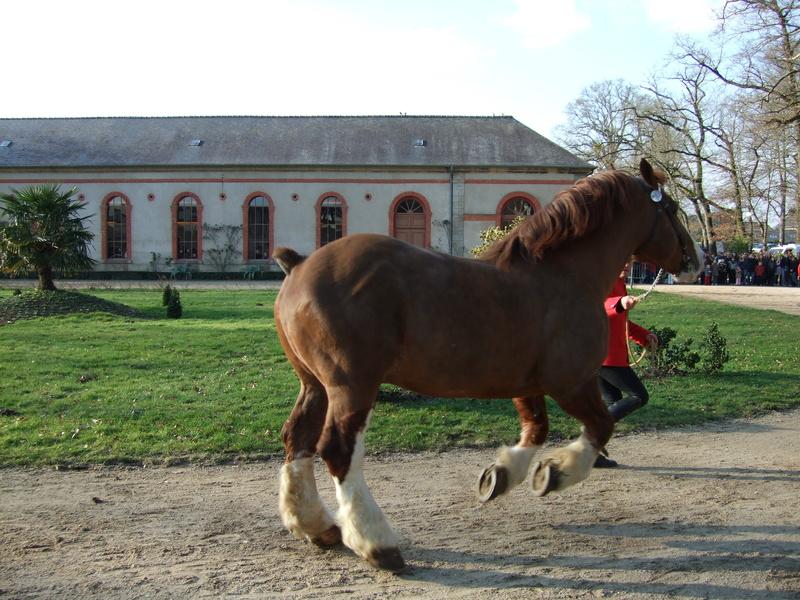 cheval breton au trot !