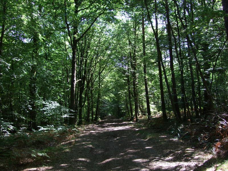 Forêt de Brocéliande près de Paimpont