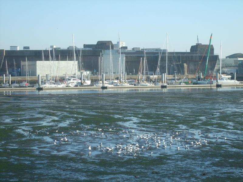 Oiseaux rade de Lorient avec en fond la base sous-marine