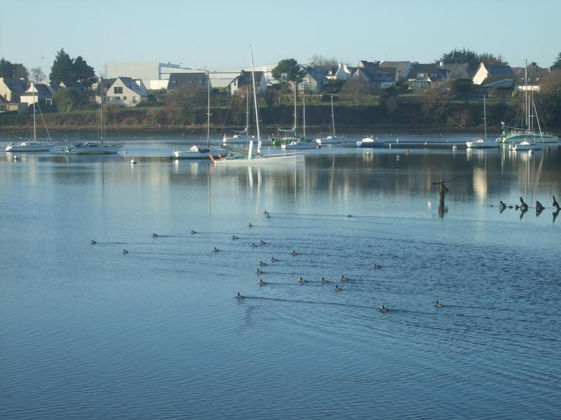 Oiseaux rade de Lorient