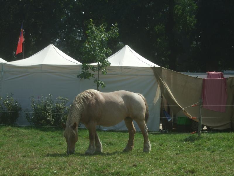 Cheval campement médiéval Malestroit 2011