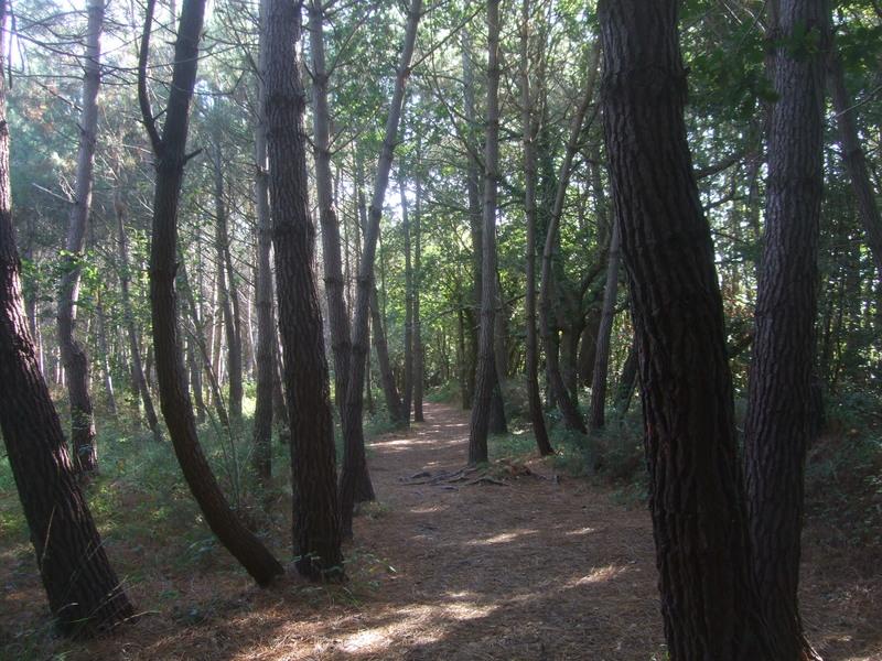 Forêt Carnac
