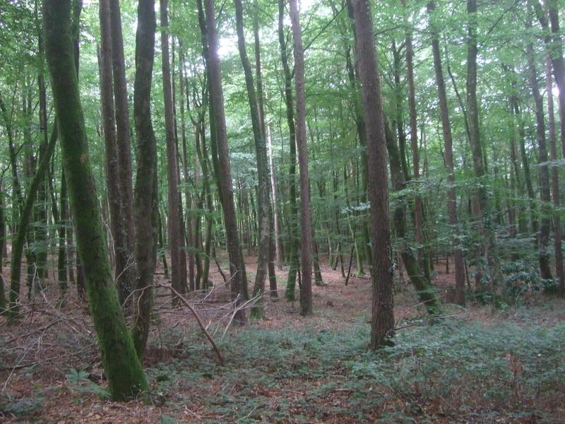 Forêt circuit Tro Bourk (Camors)