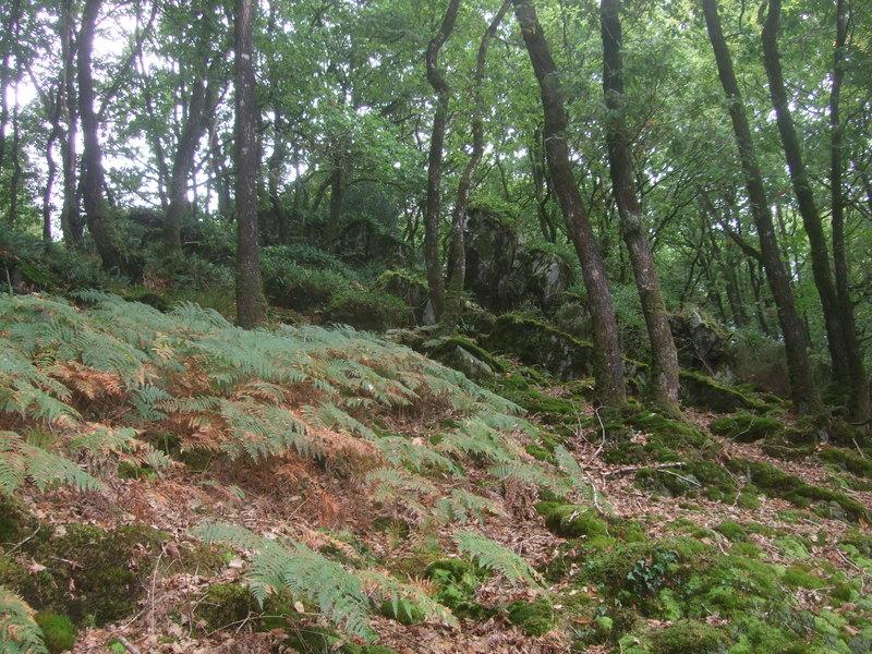 Forêt aux alentours du barrage de Guerlédan