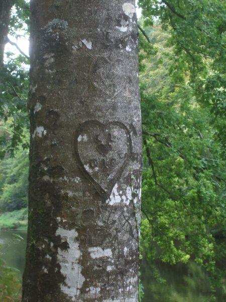 Forêt de Camors