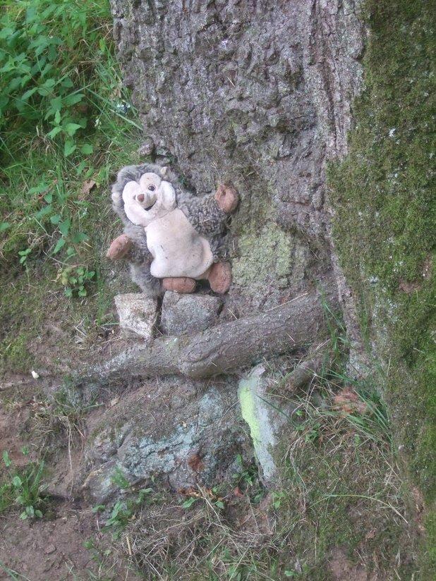 Un drôle de hérisson observer dans le village de l'an Mil de Melrand :)