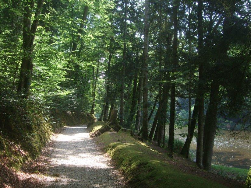 Sentier arboré parc de Kergoff 2012