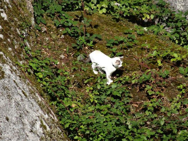 Huelgoat: seul un chat peut s'aventurer par là!