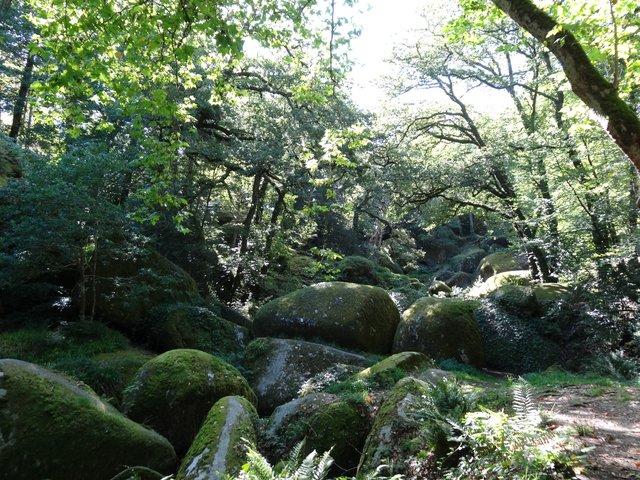 Le plein de chlorophylle et d'énergie à Huelgoat, sa forêt et ses roches graniteuses